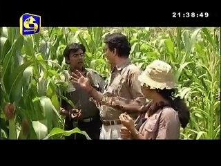 Bhawathra 03/05/2017 - 33