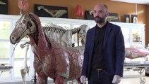 L'école vétérinaire de Toulouse veut sauver sa maquette de cheval