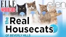 March Cuteness avec des vidéos d'animaux mignons !   The Ellen DeGeneres Show   Du Lundi à Vendredi à 20h10   Talk Show