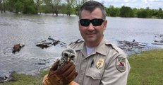Baby Owl Stranded in Flooded Waters Rescued