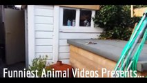 Cats are just the Funniest Pets Ever! Funny Cats Compilation ► Best Funny Cat Videos Ever!