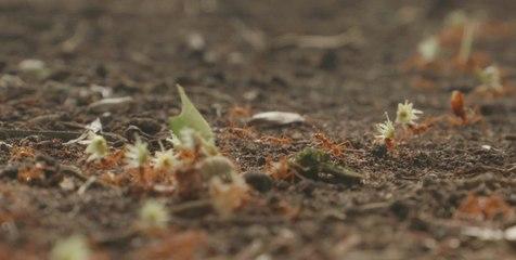 Mesmerizing Ants of Costa Rica