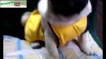 ツ funny animals ツ cute animals bonding ツ cute animals montage