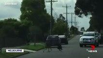 Dugót okozott egy kutya és egy kenguru pofozkodása Ausztráliában