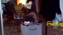 Funny Cats Gone Crazy! A Funny Animals Compilation of Funny Kitty Cats, Funny Pets, Funniest Animals