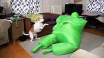 Dog Dances w-Man in Chub Suit- Funny Dog Maymo