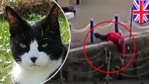 Kamera menangkap saat pria menyelamatkan kucing yang tercebur ke sungai - Tomonews