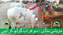 379 || Cow Mandi || 2017 || 2018 || Karachi Sohrab Goth || Cow Qurbani