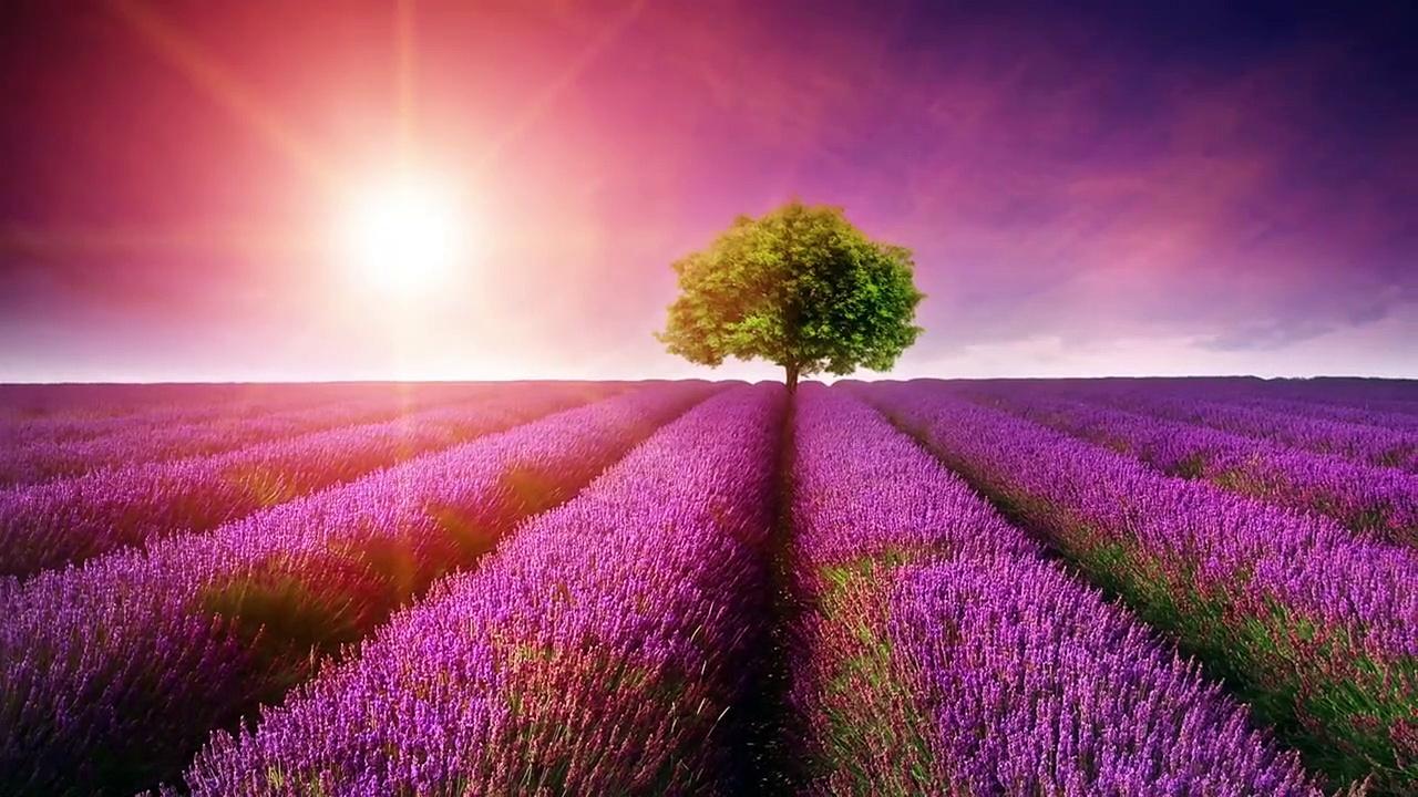 Beautiful Romantic Music: Relaxing Music, Guitar Music, Violin Music, Cello Music, Piano Music ★103 part 4/4