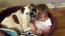 Babies and pets having fun together - Funny and cute baby & animal 3357