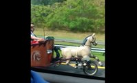 Unusual vehicle on the highway