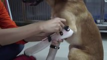 Puppy receives prosthetic paws after at