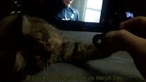 Kitten Plays With My Fidget Spinner