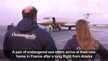 Endangered sea otters fly into Francess