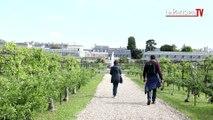 Visitez le Potager du Roi du Château de Versailles.