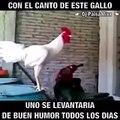 Con el canto de este gallo, uno se levanta de buen humor todos los días!