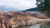 Un monstre marin découvert au large de l'Indonésie