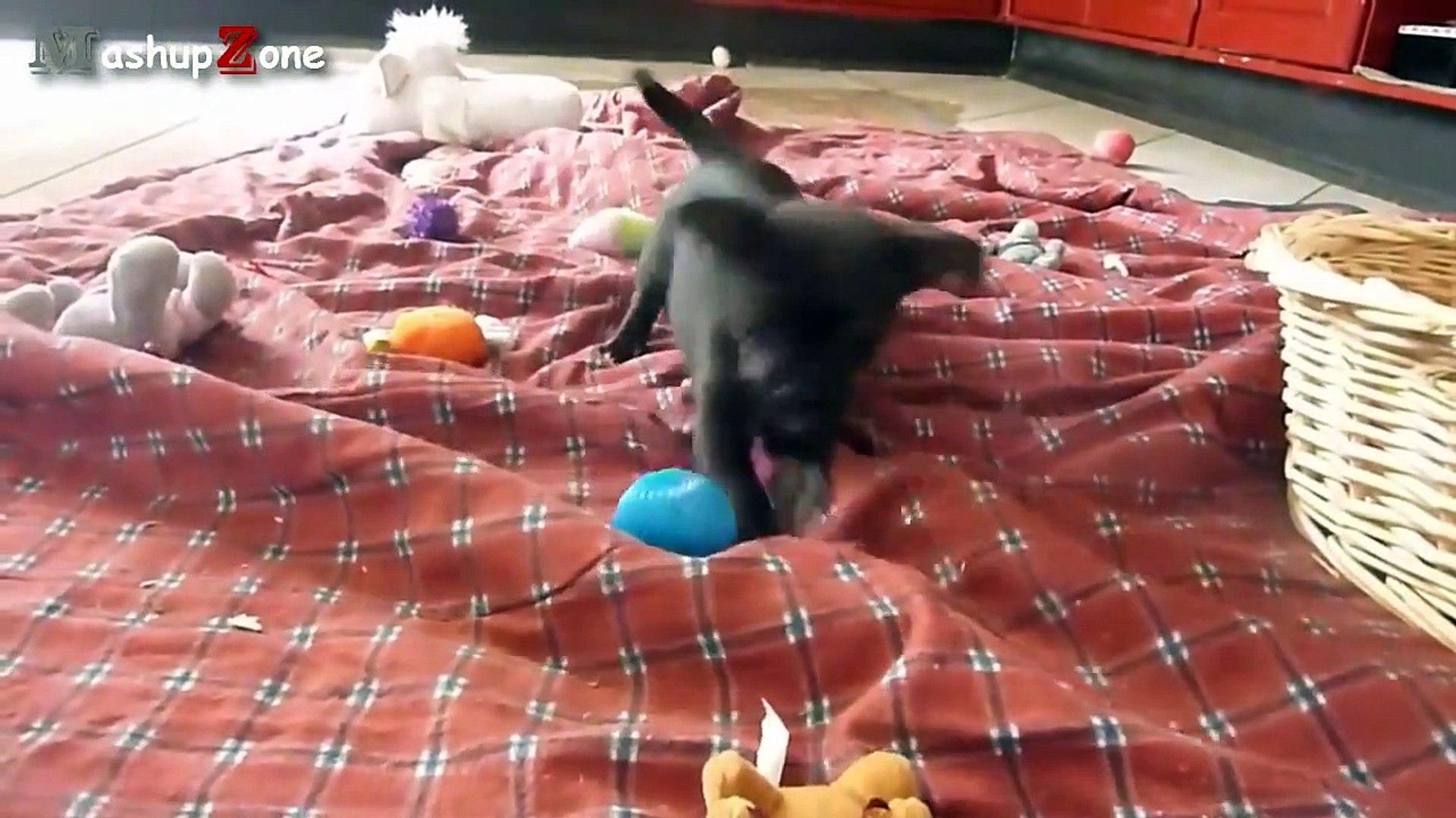 Cute Puppies - A Cute Puppy Videos Compilatio