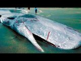 5 Disturbing Creatures To Come Out Of The Ocean!