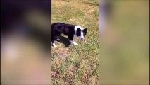 Quand tu joues à 1,2,3 soleil avec ton chien... Trop marrant