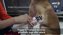 Puppy receives prosthetic pfter att