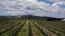Climate change battle heats up for Australian winemakersdsa