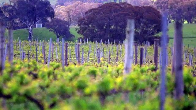 Climate change btle heats up for Australian winemakers