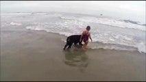 Ce chien est mieux qu'un sauveteur en mer... Il protège cette enfant des vagues