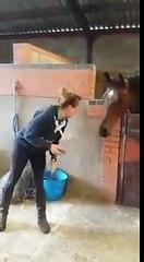 Elle commence à danser sur «All About That Bass», mais regardez ce que le cheval fait... J'en pleure de rire!