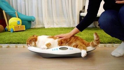 OMG! Suri Noel Family's Weight! How Much Did They Gain Weight? 충격! 수리노을 가족 몸무게 공개! 뚠뚠이들 얼마나 살 쪘나