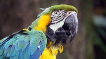 [MP4 720p] Keraban - Guadeloupe Antigua Barbuda Animal life