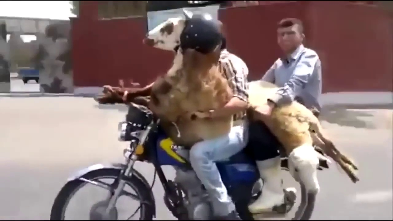 MOTORCYCLE FAIL & CRASH Compilation Funny Motorcycle Moments