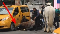 Spooked horse gets hit by taxi cab and collapses in NYC street