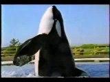 !!  Keiko une légende, il a qui fait bouger le monde pour sauvez les orques ! !!