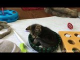 Cute Kittens Enjoy Playtime