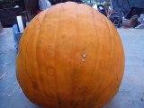 Halloween pumpkin Miffy ハロウィンかぼちゃ「ミッフィー」