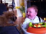Cute Babies Laughing at Dogs Compilation (2015)