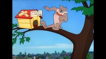 Tom and Jerry, 72 Episode - The Dog House (1952)