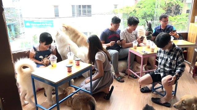 VnExpress   Giải trí   Đầu tư chó cưng để kinh doanh cà phê