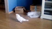 Ce perroquet terrorise un chat caché dans une boîte en carton !