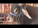 10ème salon international de l'élevage(1ère journée)