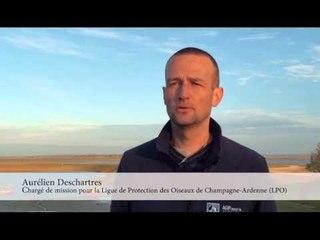 Interview d'Aurélien Deschartres, chargé de mission pour la Ligue de Protection des Oiseaux.