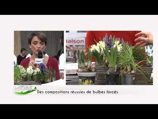 Réaliser une composition avec des bulbes forcés - Mag de Campagnes TV
