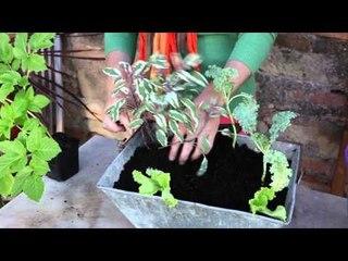 Créer une jardinière gourmande avec des légumes et aromatiques