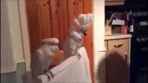 Ce perroquet se prend pour Elvis avec sa banane