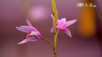 The Rise and Fall of Taiwan Orchid (Discover 401)
