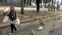 Okunoshima - l'île des lapins au Japon