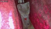 Un chat tellement chelou... mais trop chou