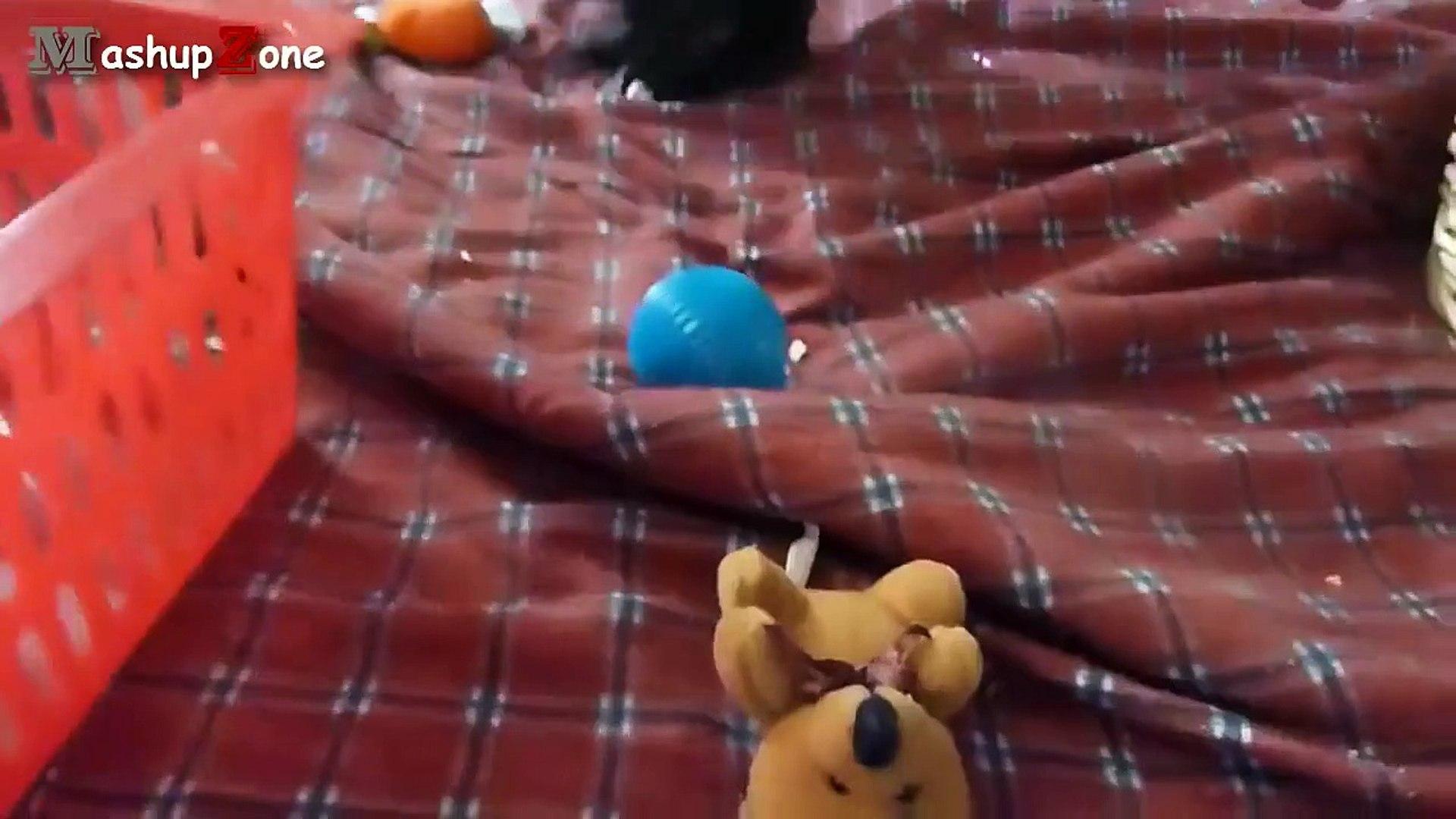 Cute Puppies - A Cute Puppy Videos Co