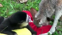 Cute Unlikely Animal Couples Compilation 2014